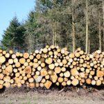 Экспорт лесной продукции из Латвии в Эстонию вырос