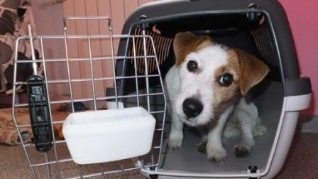 Соотечественники оказали помощь в вывозе домашних животных из Китая в Россию