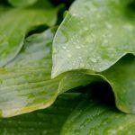 Дождливый вторник может принести град и порывы ветра