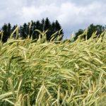 Погода в Латвии: опять желтое предупреждение