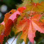 Синоптики сообщили, какими в Латвии будут осень и зима