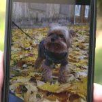 Женщину в Ильгюциемсе пришлось смотреть, как убивают ее собаку (+ВИДЕО)
