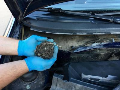 5 серьезных проблем, которые опавшие листья доставят машине и ее владельцу