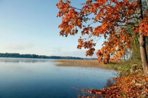 Синоптики рассказали, какая погода будет в начале октября