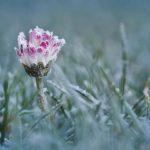 Раскрыт прогноз погоды на ближайшие дни в Латвии