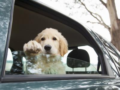 Как максимально быстро очистить салон и багажник авто от шерсти кота или собаки