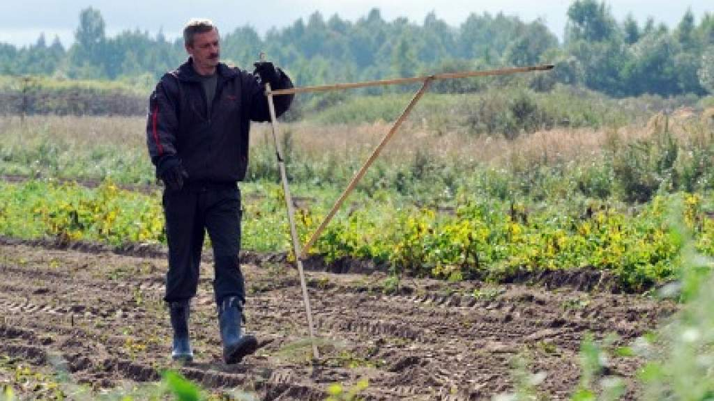 Альтернатива дальневосточному: в Вологодской области получить гектар могут все желающие